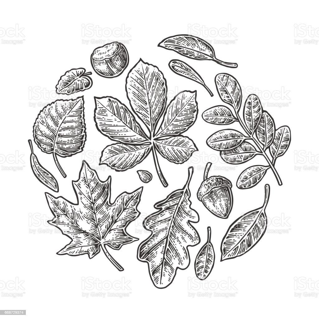 Set leaf. Vector vintage engraved illustration. – Vektorgrafik