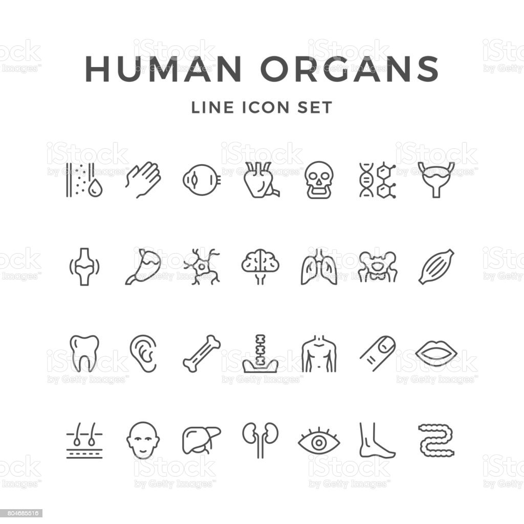 Set line icons of human organs vector art illustration
