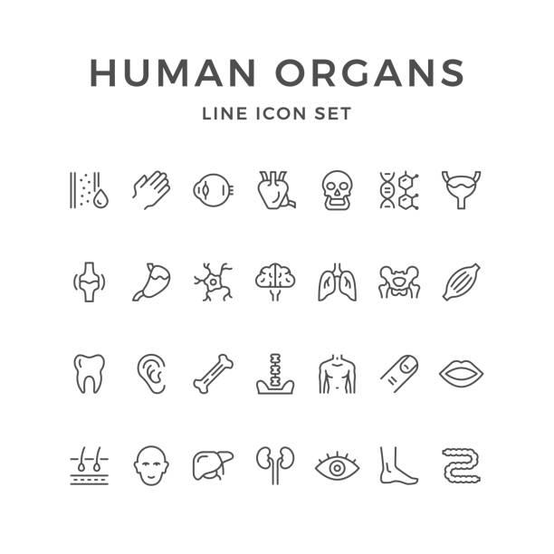 인간 장기의 선 아이콘 설정 - 척추 신체 부분 stock illustrations