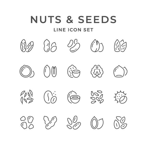 set line icons of nuts and seeds - nuts stock illustrations