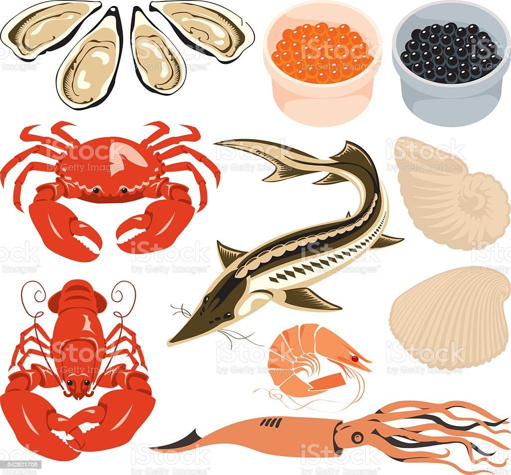 set marine animals vector art illustration