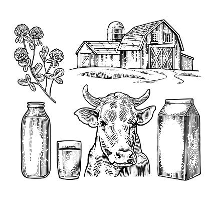 Set Milk farm. Cow head, clover, box carton package, bottle.