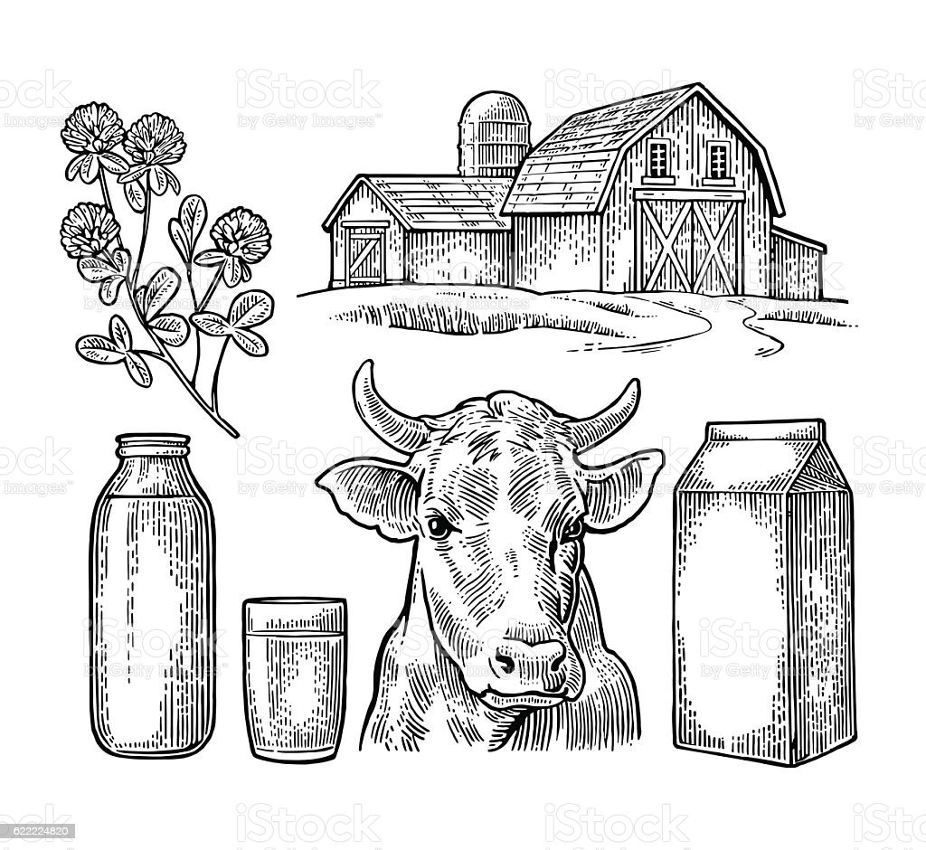 Set Milk farm. Cow head, clover, box carton package, bottle. vector art illustration
