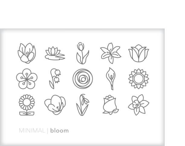 bildbanksillustrationer, clip art samt tecknat material och ikoner med uppsättning av 15 minimal grå bloom ikoner från olika blomma typer - amaryllis