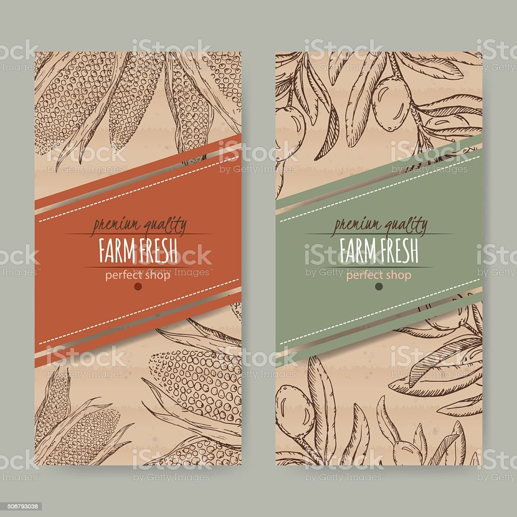Set of 2 labels with corn cobs and olive branch. vector art illustration
