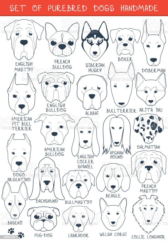 Zestaw 24 różnych Ras psów ręcznie. Pies głowy – artystyczna grafika wektorowa