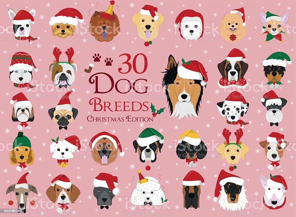 Set of 30 dog breeds with Christmas and winter themes vector art illustration