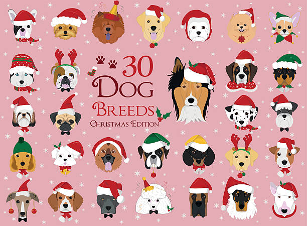 set of 30 dog breeds with christmas and winter themes - collie stock-grafiken, -clipart, -cartoons und -symbole