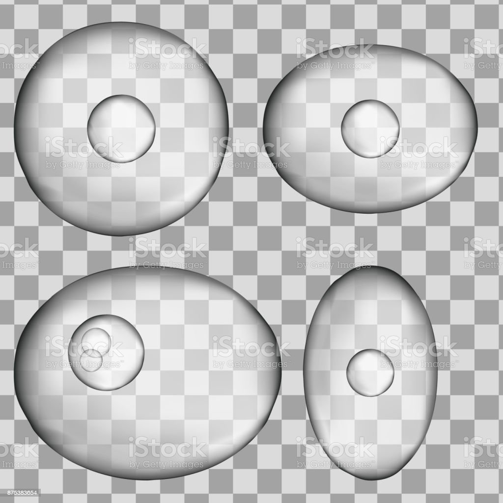 Set of 3d Isolated human grey cell. Realistic vector illustration. Template for medicine and biology vector art illustration
