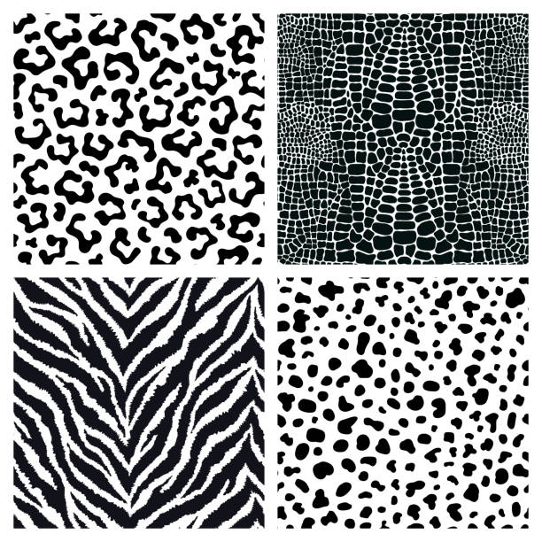 Set of 4 black and white animal fur, skin seamless patterns. Exotic backgrounds. Vector wallpapers. Set of 4 black and white animal fur, skin seamless patterns. Exotic backgrounds. Vector wallpapers. animal markings stock illustrations
