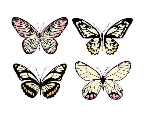 A set of 4 realistic butterflies made in the same style. Butterflies isolated on white background. Vector illustration