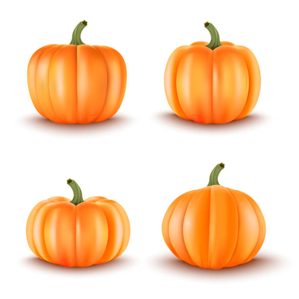 Set of 4 Realistic Pumpkins.Halloween decoration.Vector illustration Set of 4 Realistic Pumpkins.Halloween decoration.Vector illustration pumpkin stock illustrations