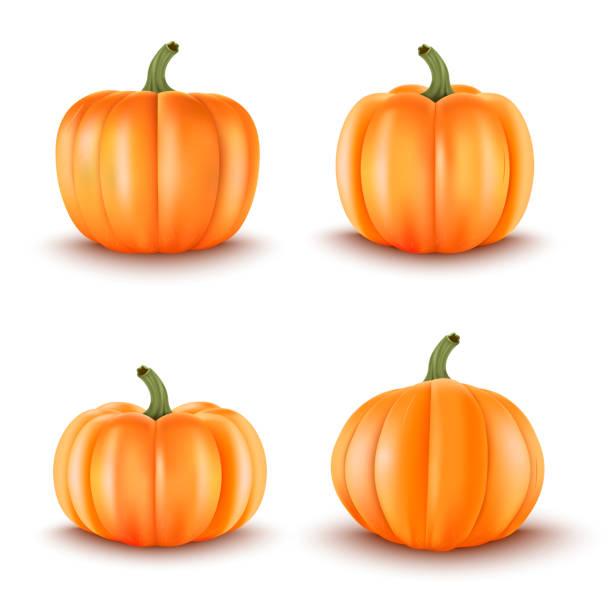 Set of 4 Realistic Pumpkins.Halloween decoration.Vector illustration Set of 4 Realistic Pumpkins.Halloween decoration.Vector illustration squash vegetable stock illustrations