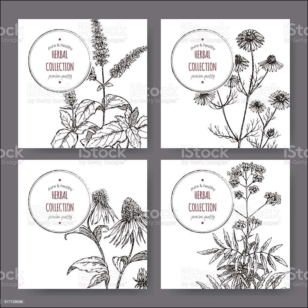 Set of 4 vector herbal tea labels vector art illustration