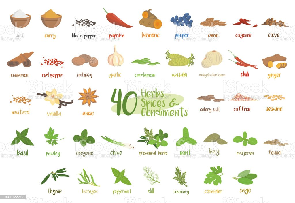 Set of 40 different culinary herbs, species and condiments in cartoon style. vector art illustration