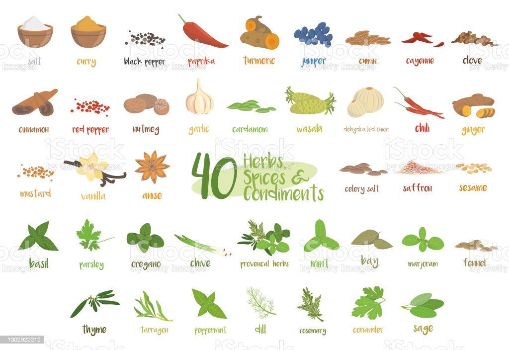 Conjunto de 40 ervas culinárias diferentes, espécies e condimentos no estilo cartoon. - ilustração de arte em vetor