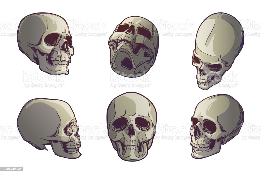 3192955798a Set of 5 Human Skulls in various view angles. Linear drawing painted in 3  shades