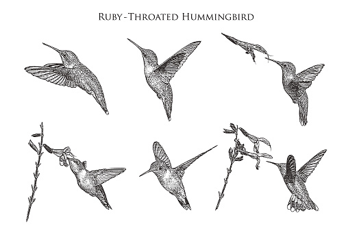 Set of 6 Ruby Throated Hummingbirds