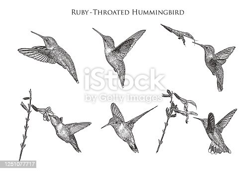 Set of 6 Ruby Throated Hummingbirds