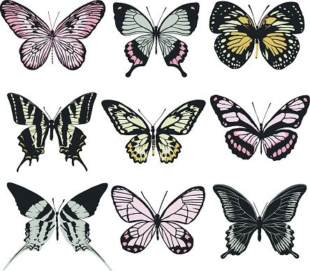 A set of 9 realistic butterflies made in the same style. Butterflies isolated on white background. Vector illustration