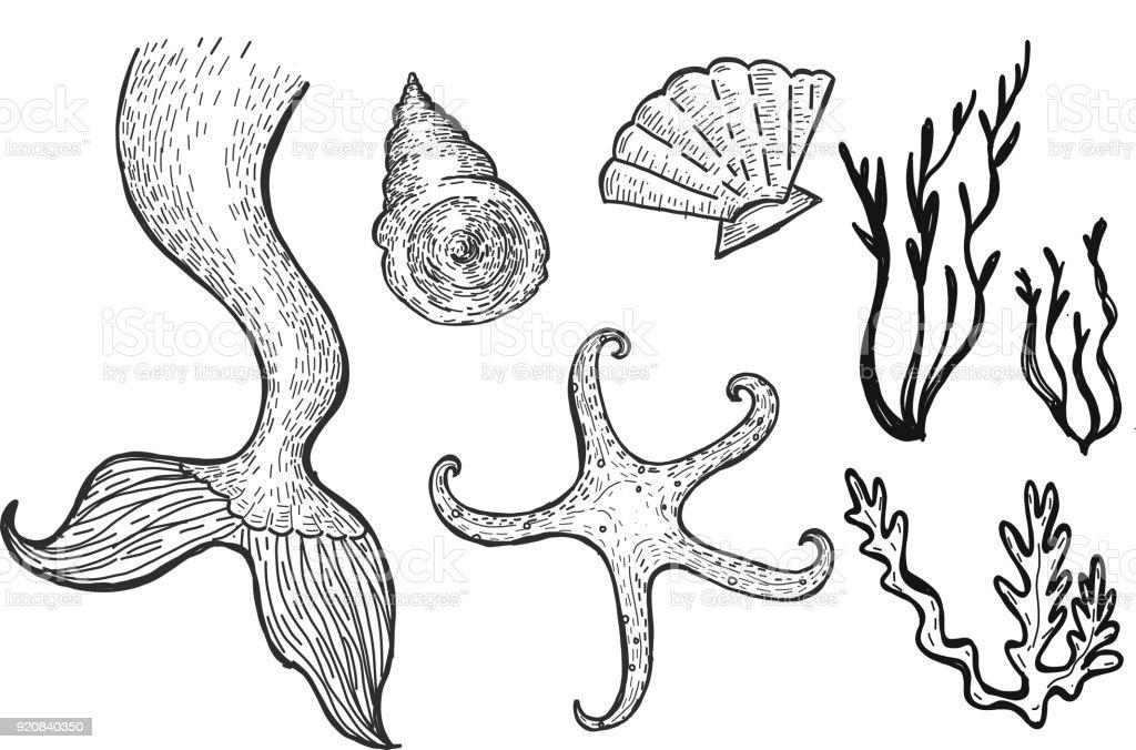 Deniz Kızı Sualtı Deniz Elemanlarının çizimi Ayarla Stok Vektör