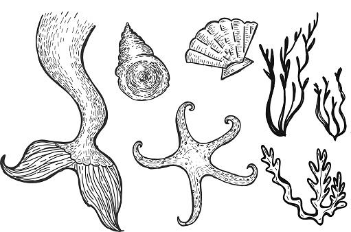 Set of a drawing of mermaid underwater sea elements