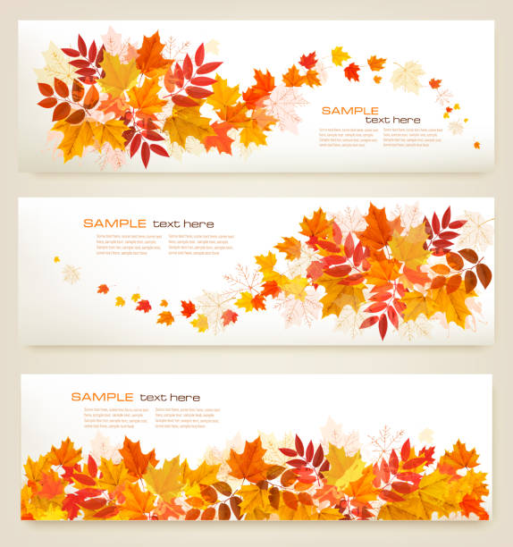 illustrazioni stock, clip art, cartoni animati e icone di tendenza di set of abstract autumn banners with colorful leaves vector - foglie