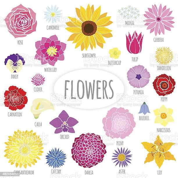 Set of abstract flat flowers vector id482454653?b=1&k=6&m=482454653&s=612x612&h=a3wfebanhtlxcgs2tyoxbudlouvnrajqfbymqklsk k=