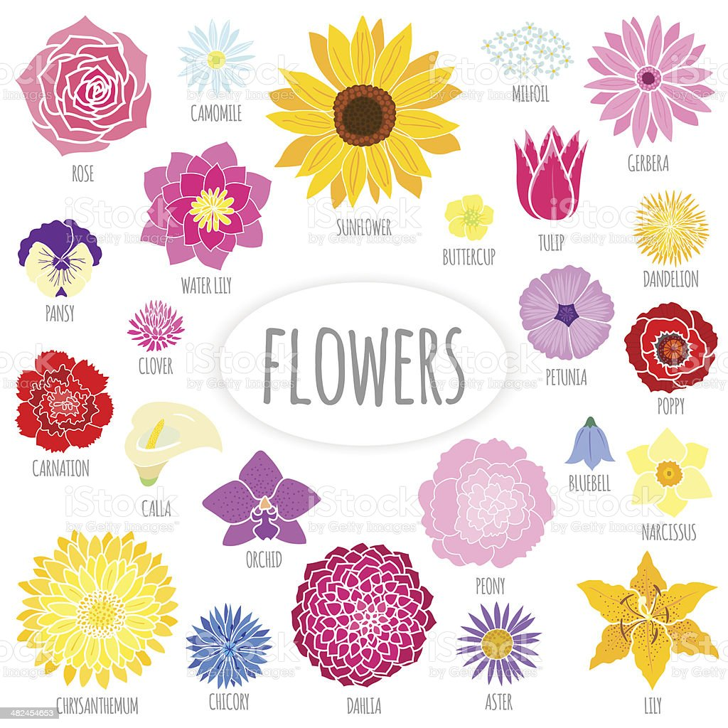Set of abstract flat flowers. vector art illustration