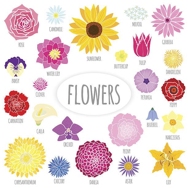 Ensemble d'abstrait fleurs à écran plat. - Illustration vectorielle