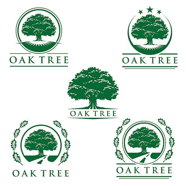 Top 60 Oak Tree Clip Art Vector Graphics And Illustrations Istock