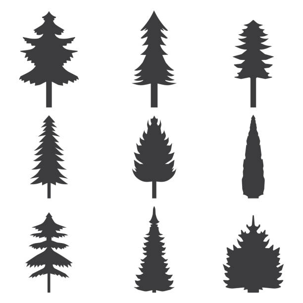 bildbanksillustrationer, clip art samt tecknat material och ikoner med set of abstract stylized balack trees silhouette. vector illustration - gran