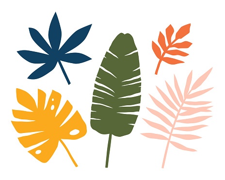 Set of abstract tropical leaves, palms, trees. Jungle print.