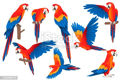 Set of adult parrot of red-and-green macaw Ara (Ara chloropterus) cartoon bird design flat vector illustration isolated on white background.