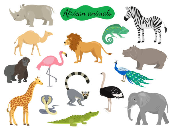 白い背景の上のアフリカの動物のセットです。 - 動物園点のイラスト素材/クリップアート素材/マンガ素材/アイコン素材