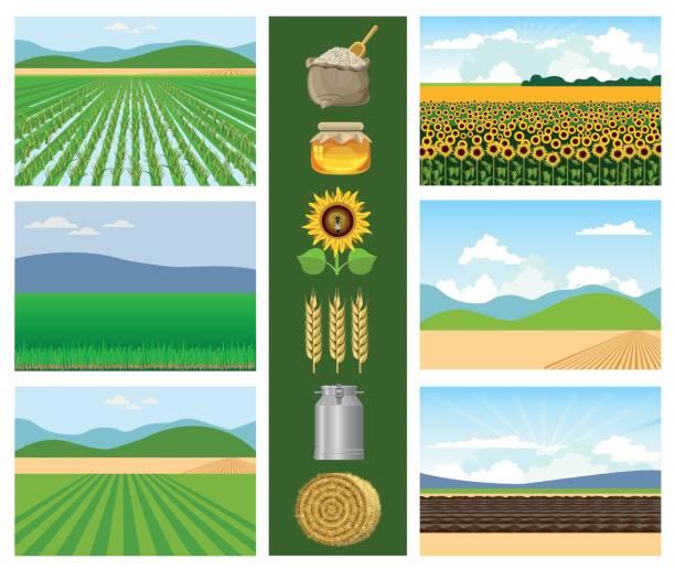 ilustraciones, imágenes clip art, dibujos animados e iconos de stock de conjunto de campos agrícolas. - straw field