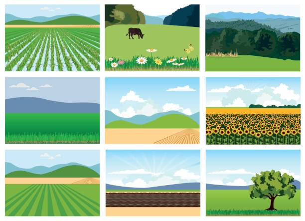 Set of agricultural fields. Set of agricultural fields. Vector illustrations. corn crop stock illustrations