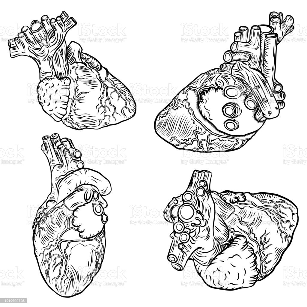 Set Of Anatomical Hearts Hand Drawn Flash Tattoo Concept Of Anatomy