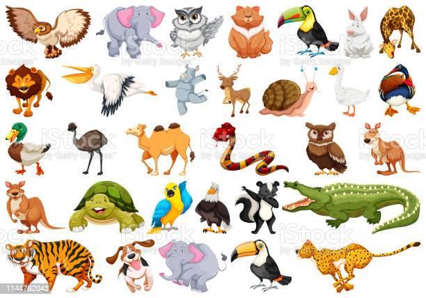 Set of animal character vector id1144762043?b=1&k=6&m=1144762043&s=612x612&h=y80axobki fjasrrzywoz6qcdw4xtwiyrjq1vpf8gqg=