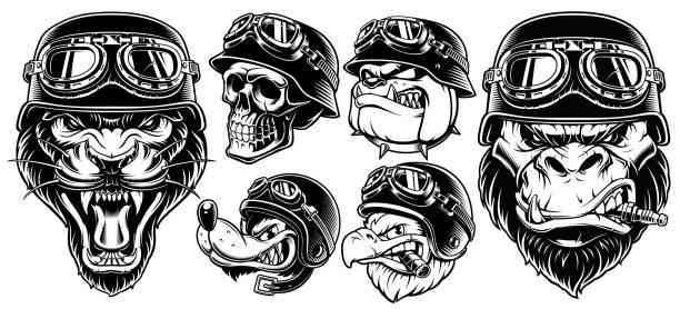 satz von tieren biker - sportschutzhelm stock-grafiken, -clipart, -cartoons und -symbole