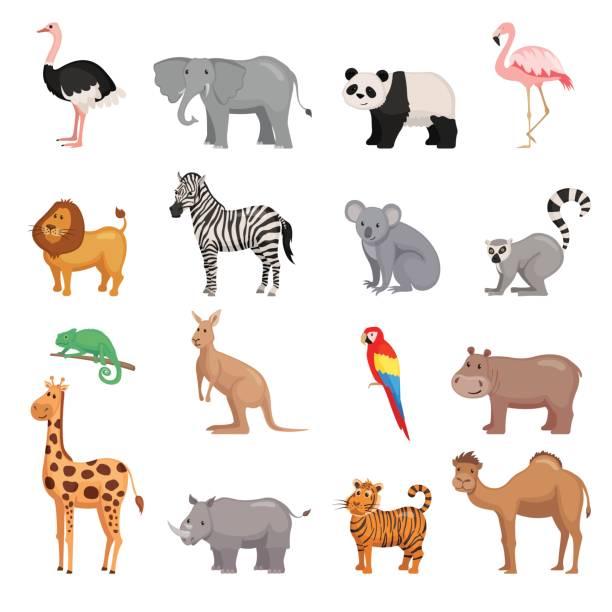 Ensemble d'animaux de zoo - Illustration vectorielle