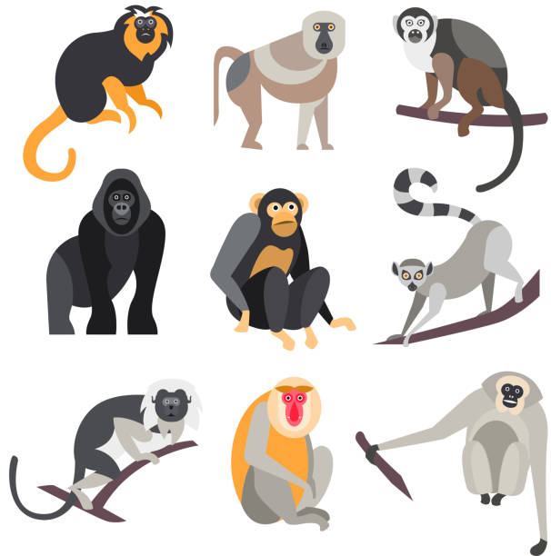 Set of Apes and Monkeys. Vector Illustration Collection of primates in flat style, vector illustration marmoset stock illustrations