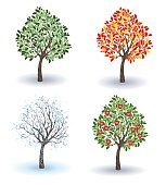 artistically painted small apple tree in winter, autumn, summer and spring season on a white background