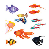 Set of aquarium fish. Realistic and fairytale underwater characters.