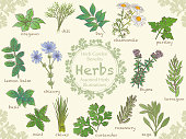 Set of asserted illustrations of various herbs. Vector illustrations.