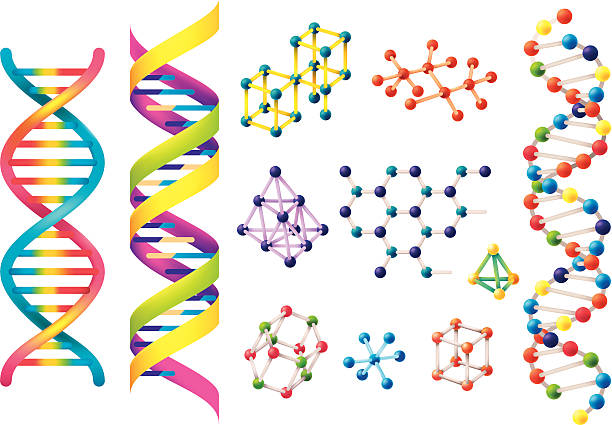 Set of assorted colorful DNA models DNA illustration.eps8,ai8,jpg format are available. helix model stock illustrations