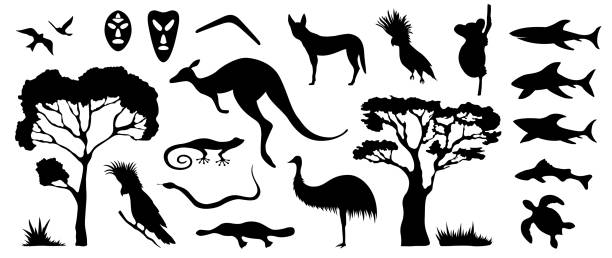 set of australian animals and birds silhouettes. the nature of australia. - koala stock illustrations