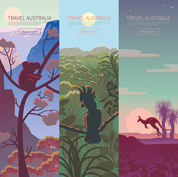 set of australian travel posters - koala stock illustrations
