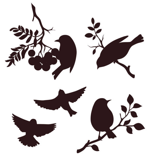 Set of autumn bird and twig silhouettes. Decorative birds sitting on twigs of tree and flying Vector illustration songbird stock illustrations