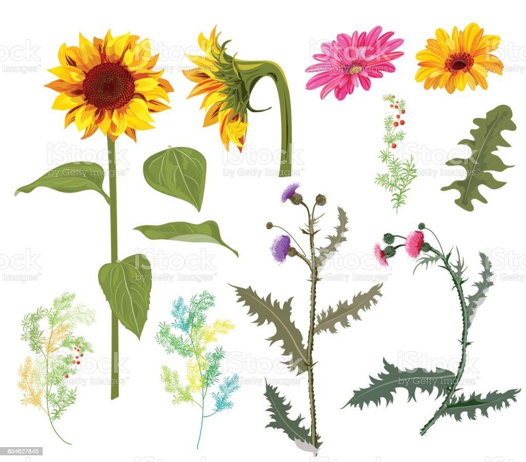 Sonbahar Cicek Kumesi Sari Aycicegi Gerbera Papatya Cicek Thistle